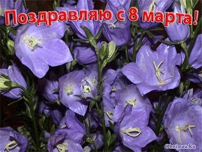 http://www.obnimau.ru/img/flowers-8-marth.jpg